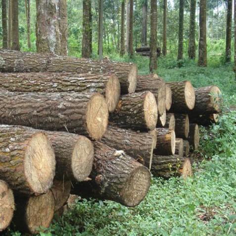 Công dụng gỗ tự nhiên